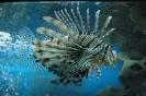 Лазаревское аквапарк океанариум